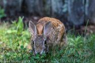 Rabbit_26