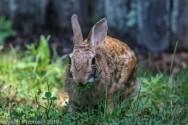 Rabbit_27