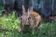 Rabbit_28