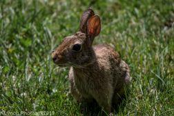 rabbit_5