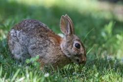 Rabbit_6