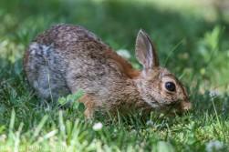 Rabbit_7