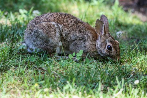 Rabbit_8