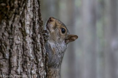 Squirrel_1