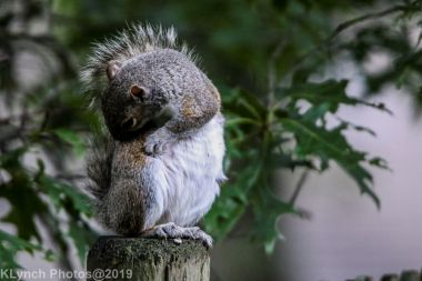Squirrel_10