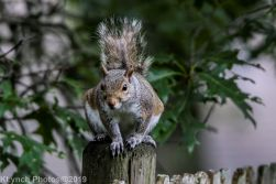 Squirrel_12