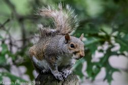 Squirrel_15