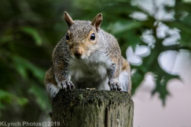 Squirrel_17