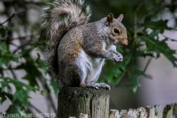 Squirrel_4