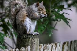 Squirrel_5