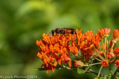 Wasp_3