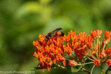 Wasp_4