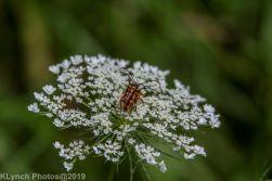 bugs_1