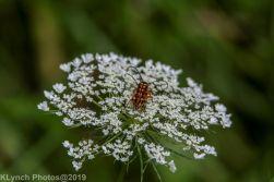 bugs_2