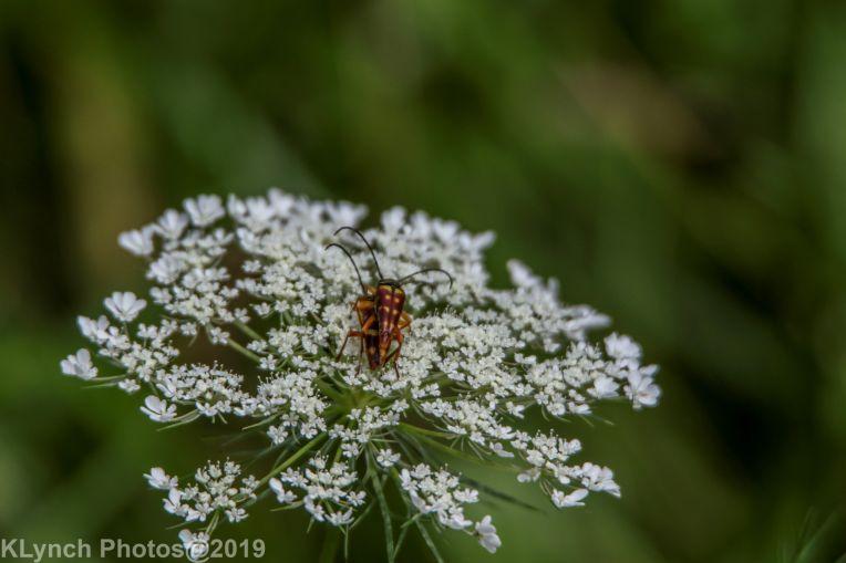 bugs_3