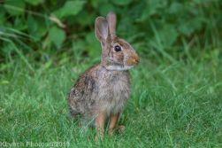 Rabbits_1