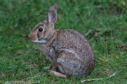 Rabbits_12