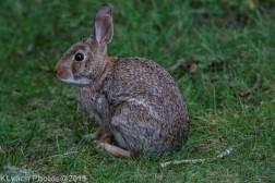 Rabbits_13
