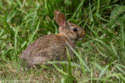 Rabbits_17