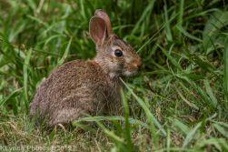 Rabbits_18