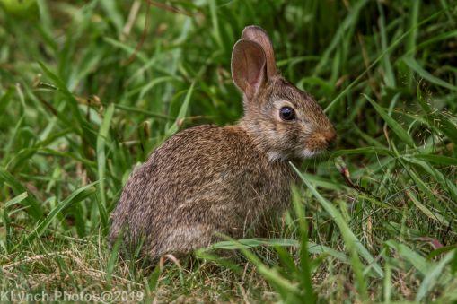 Rabbits_19