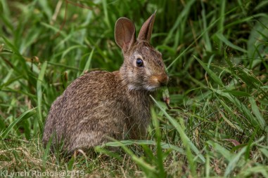 Rabbits_20