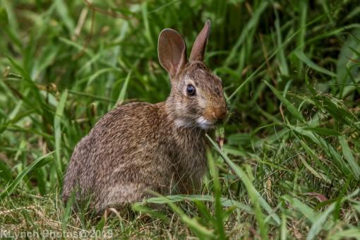 Rabbits_22