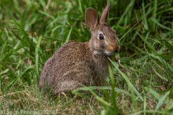 Rabbits_23