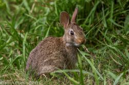 Rabbits_24