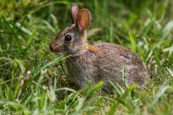 Rabbits_27