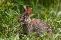 Rabbits_28