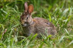Rabbits_29