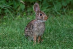 Rabbits_3