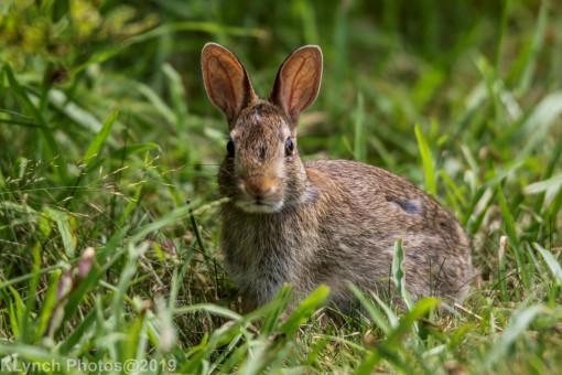 Rabbits_30