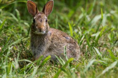 Rabbits_32