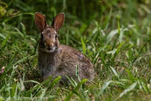 Rabbits_33