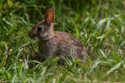 Rabbits_34