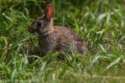 Rabbits_35