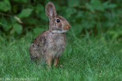 Rabbits_4