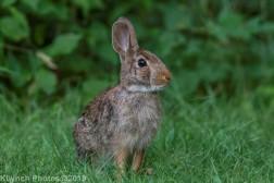 Rabbits_5