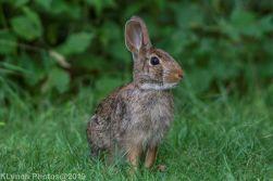 Rabbits_6
