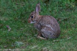 Rabbits_7