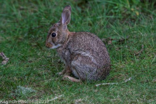 Rabbits_8
