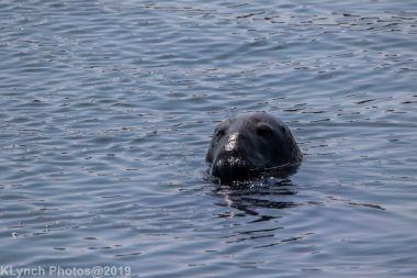 Seal_10