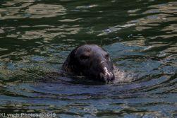 Seal_6