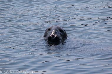 Seal_9