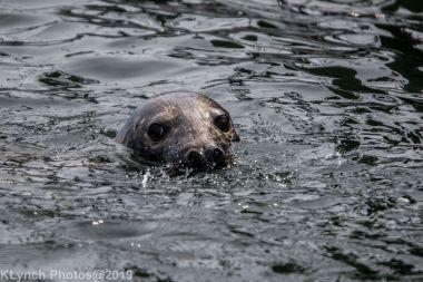 Seals_10
