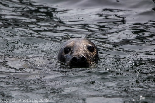 Seals_11