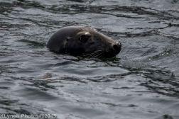 Seals_16