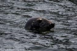 Seals_17